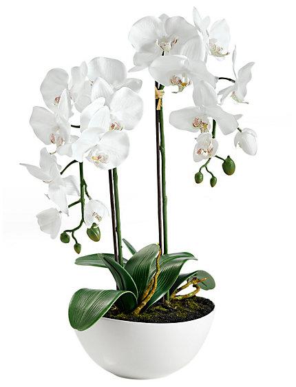 orchid e artificielle blanche 2 branches helline. Black Bedroom Furniture Sets. Home Design Ideas