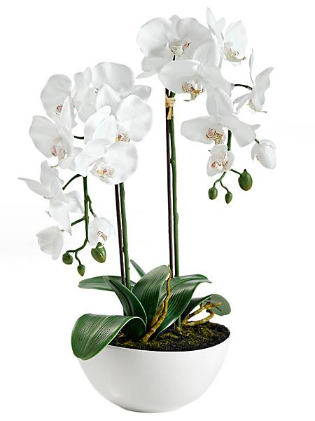 helline home - Orchidée artificielle blanche à 2 branches