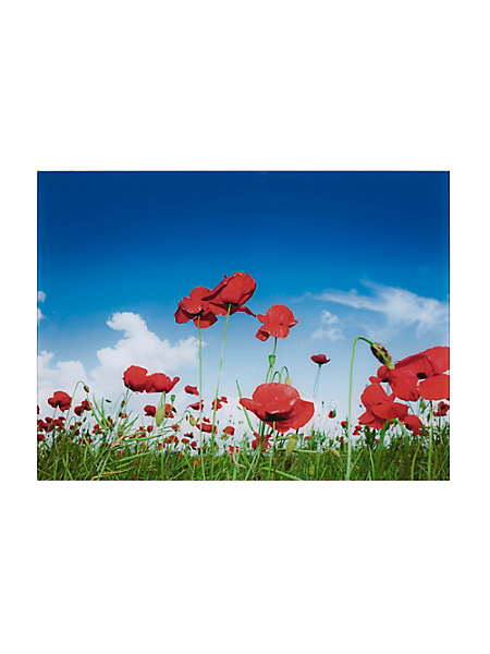 helline home - Tableau coquelicot