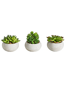 helline home - Succulentes décoratives, lot de 3